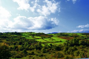 I verdi campi di Borrello