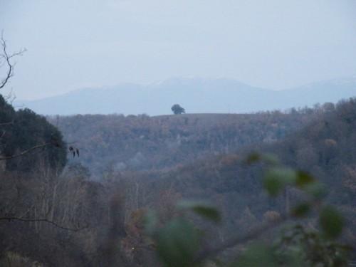 Civita Castellana - la grande quercia solitaria