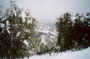 neve a  Rutino