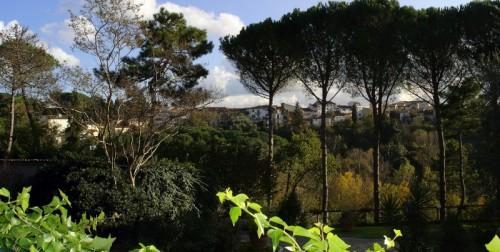 Fauglia - Fauglia panoramica