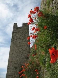 Papaveri e torre