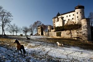 Cavalli in fuga a castel Presule