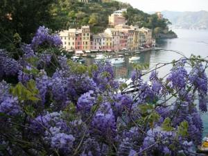 Portofino- Vista tra i glicini