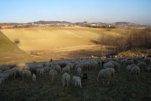Paesaggio agreste a Cerrina