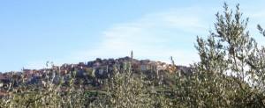 Montenero e argentei ulivi