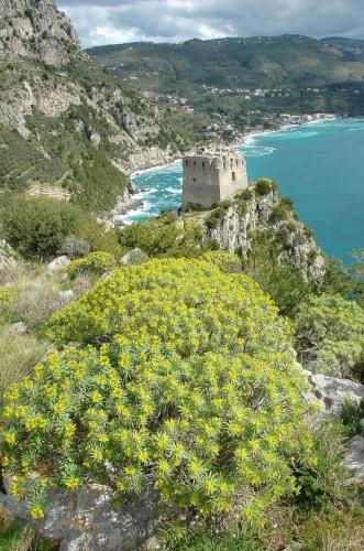 Massa Lubrense - La torre di Montalto