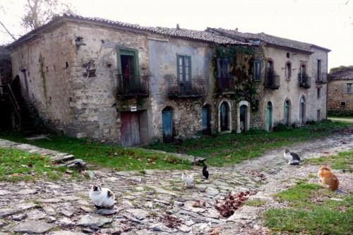 Roscigno - Sono rimasti quattro gatti, anzi cinque...
