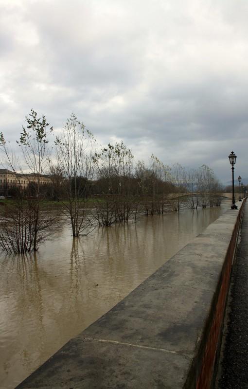 ''Gli alberi soccombono'' - Firenze