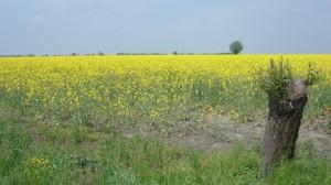 vedo giallo fino all'orizzonte