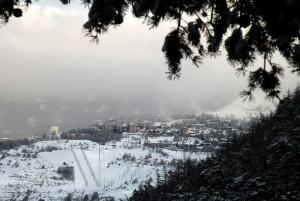 Uno sguardo tra nebbia e rami