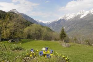Primavera in valle Antigorio 2