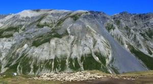 Pascoli sul Colle della Maddalena, oltre i 2000metri.