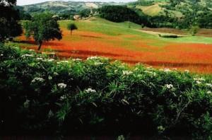 Panorama biancorossoverde