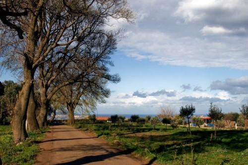 Campo Calabro - Nei campi di Campo calabro