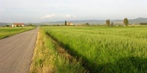 Alberese: una freccia grigia nei campi