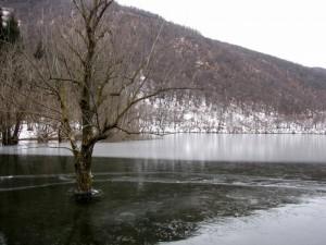 """Albero """"prigionerio"""" del lago ghiacciato"""
