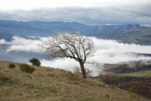 Inverni di Lucania