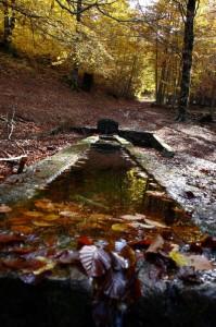 Sorgente Sfranatara riflessa nell'autunno della Val Fondillo…..