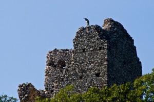Torre Baccelli e airone
