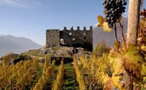 Un grappolo d'uva sul castello
