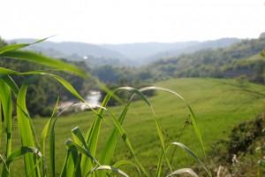 L'erba del Calore