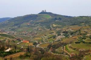 Valle dei ciliegi