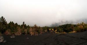 Aspettando la nebbia