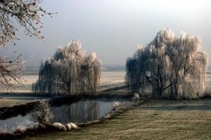 panorama invernale delle campagne Bozzolesi