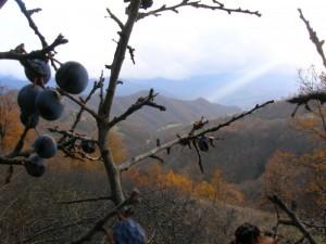 La Val Vona