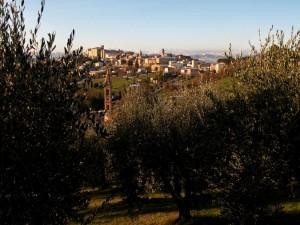 Alba tra gli olivi