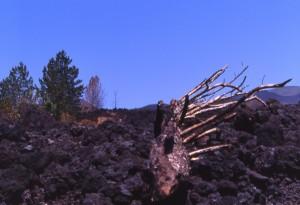 Etna, effetti della colata