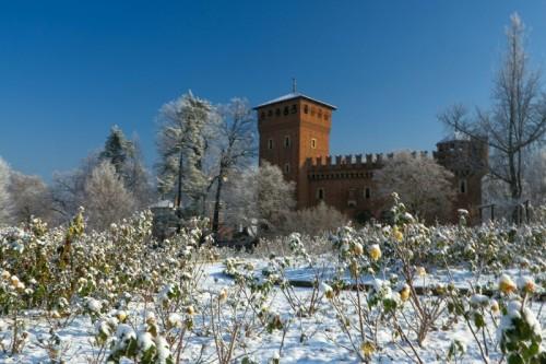 Torino - ....rose gialle...
