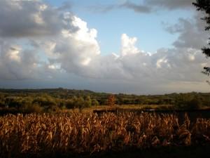 COMERCONI - Panorama d'autunno