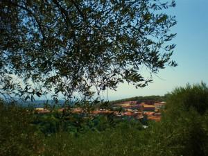 ROMBIOLO - Un paese tra gli ulivi