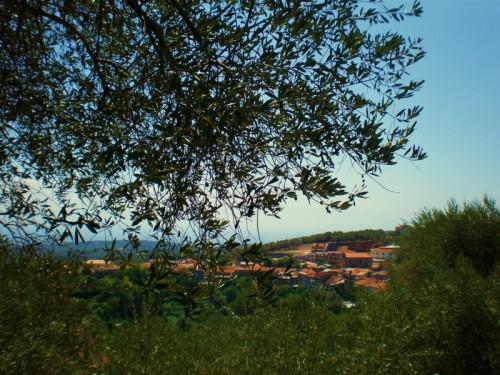 Rombiolo - ROMBIOLO - Un paese tra gli ulivi