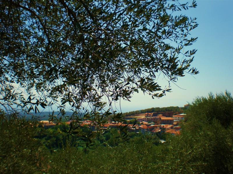 ''ROMBIOLO - Un paese tra gli ulivi'' - Rombiolo