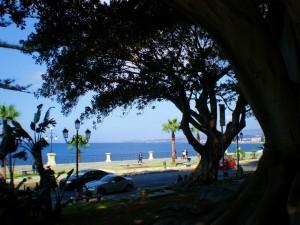 REGGIO CALABRIA - Via Marina tra le secolari magnolie
