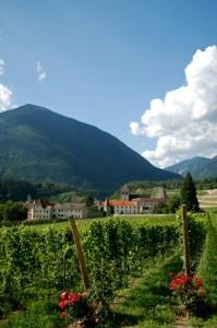 Varna e le viti del suo ottimo vino