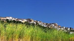Macchia Valfortore - Le radici