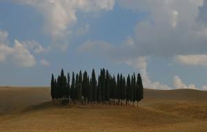 i cipressi più fotografati d' Italia