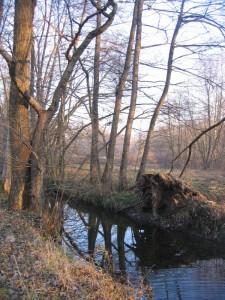 Palude Brabbia, in inverno