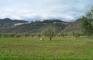 L'origine dei nomi ! - S. Maria oliveto ( frazione di Pozzilli )