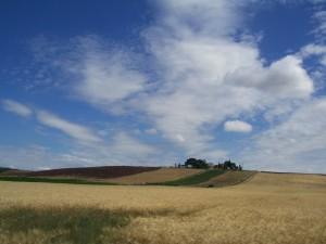 Meravigliosa Toscana