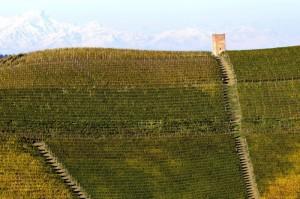 Barbaresco e vigne 03
