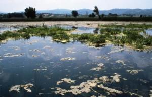 Il lago che cammina