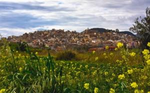 Siculiana, fiori e olivi
