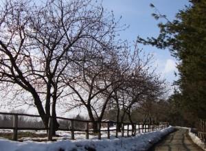 Veduta invernale di Strada Montebello