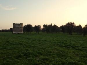 Torre colombaia della Masseria Palumbaro - Morigino
