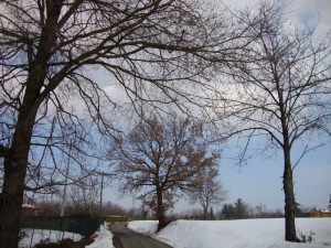 Strada Montebello: paesaggio invernale