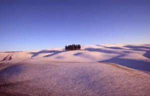 cipressi nella Val d'Orcia